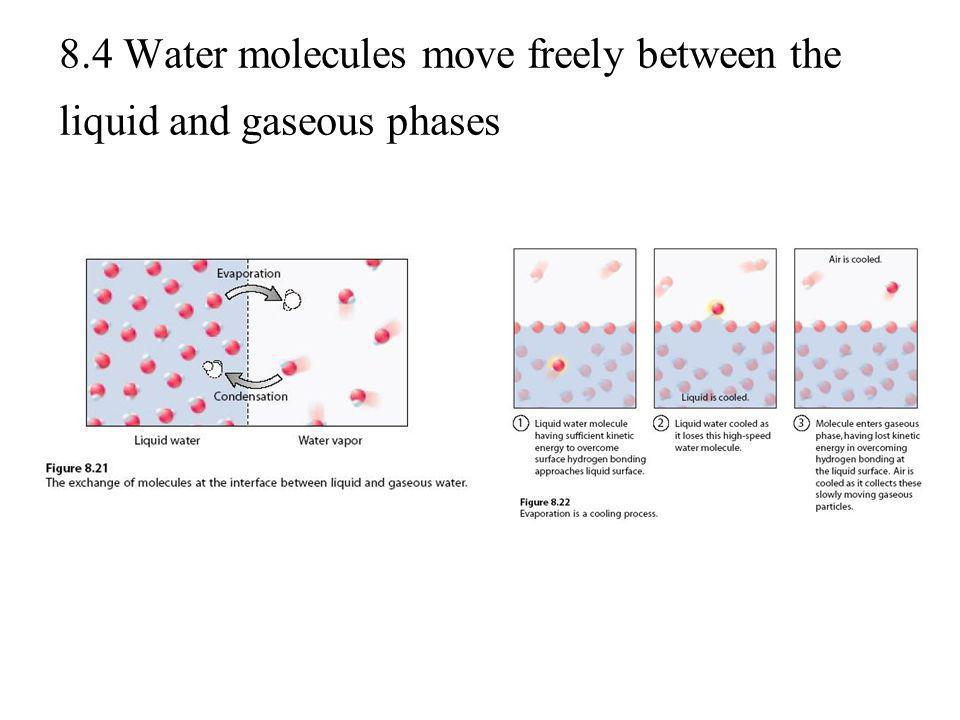 8.4 Water molecules move freely between the liquid and gaseous phases