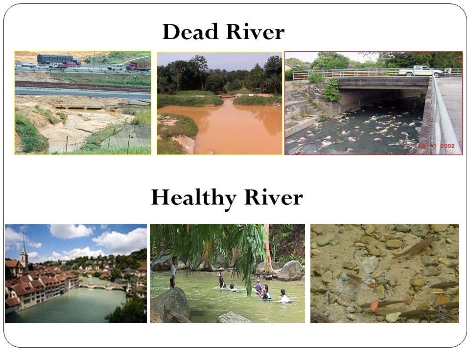 Dead River Healthy River