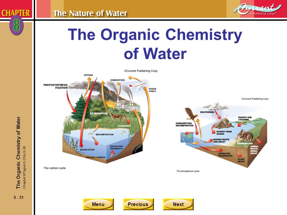 The Organic Chemistry of Water