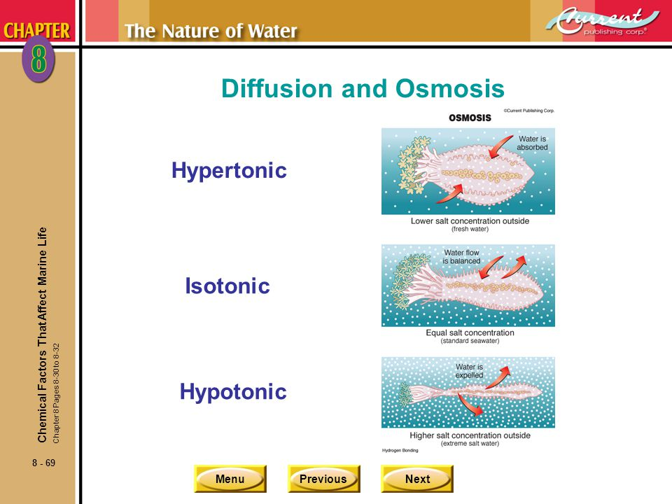 Diffusion and Osmosis Hypertonic Isotonic Hypotonic