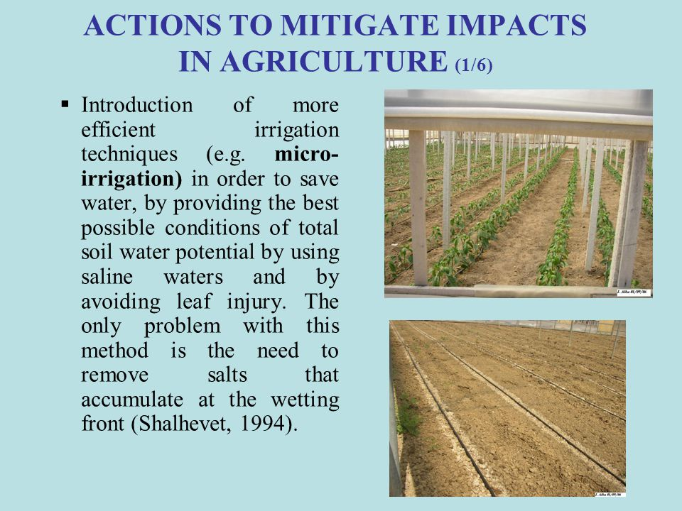 ACTIONS TO MITIGATE IMPACTS IN AGRICULTURE (1/6)