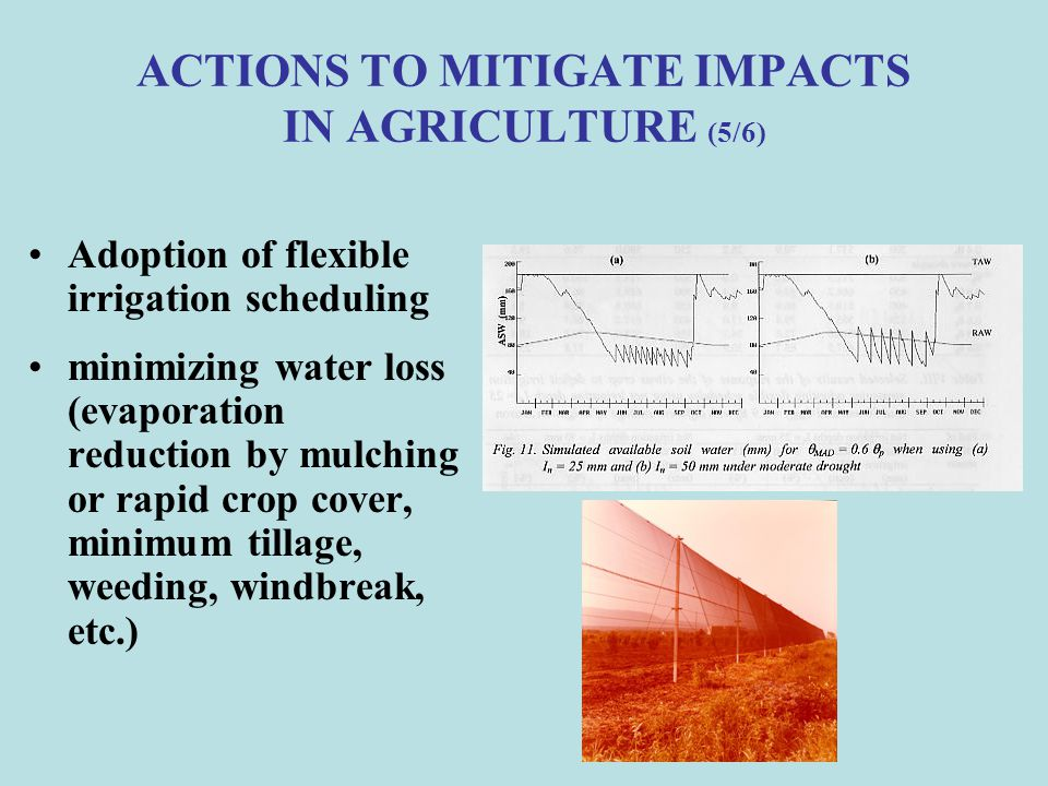 ACTIONS TO MITIGATE IMPACTS IN AGRICULTURE (5/6)