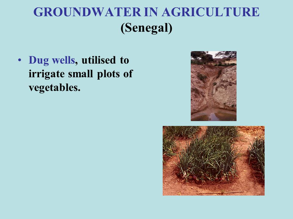 GROUNDWATER IN AGRICULTURE (Senegal)