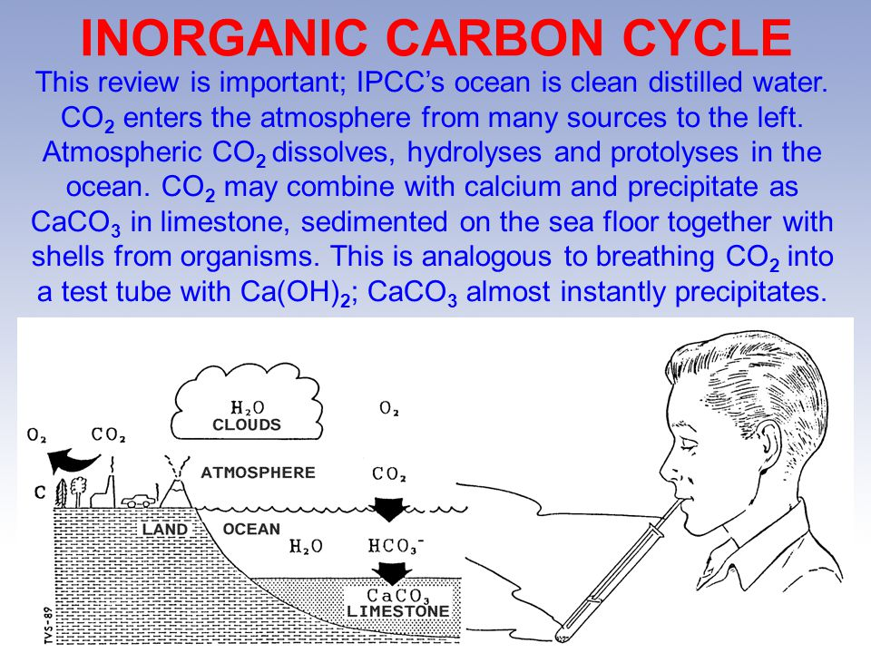 INORGANIC CARBON CYCLE