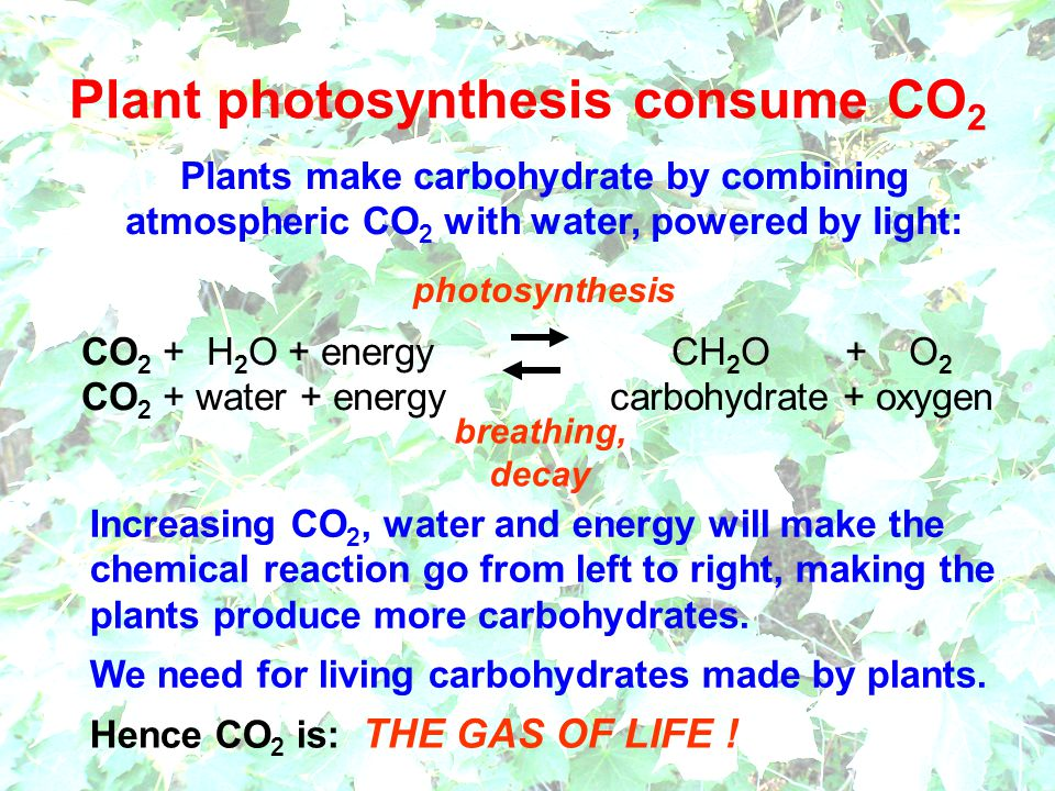 Plant photosynthesis consume CO2