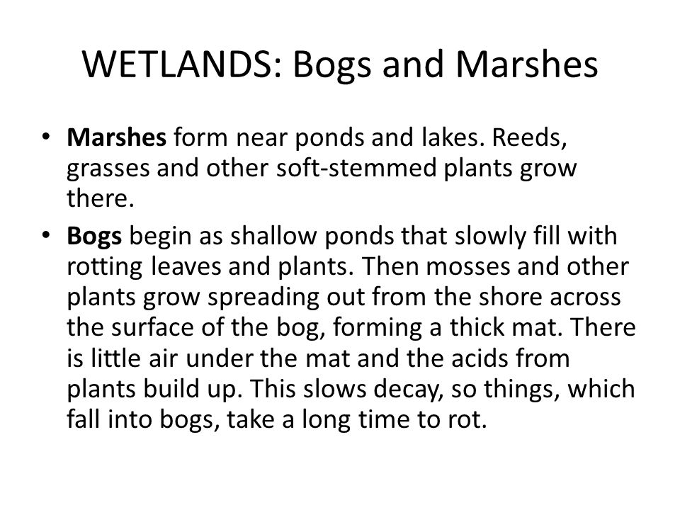 WETLANDS: Bogs and Marshes