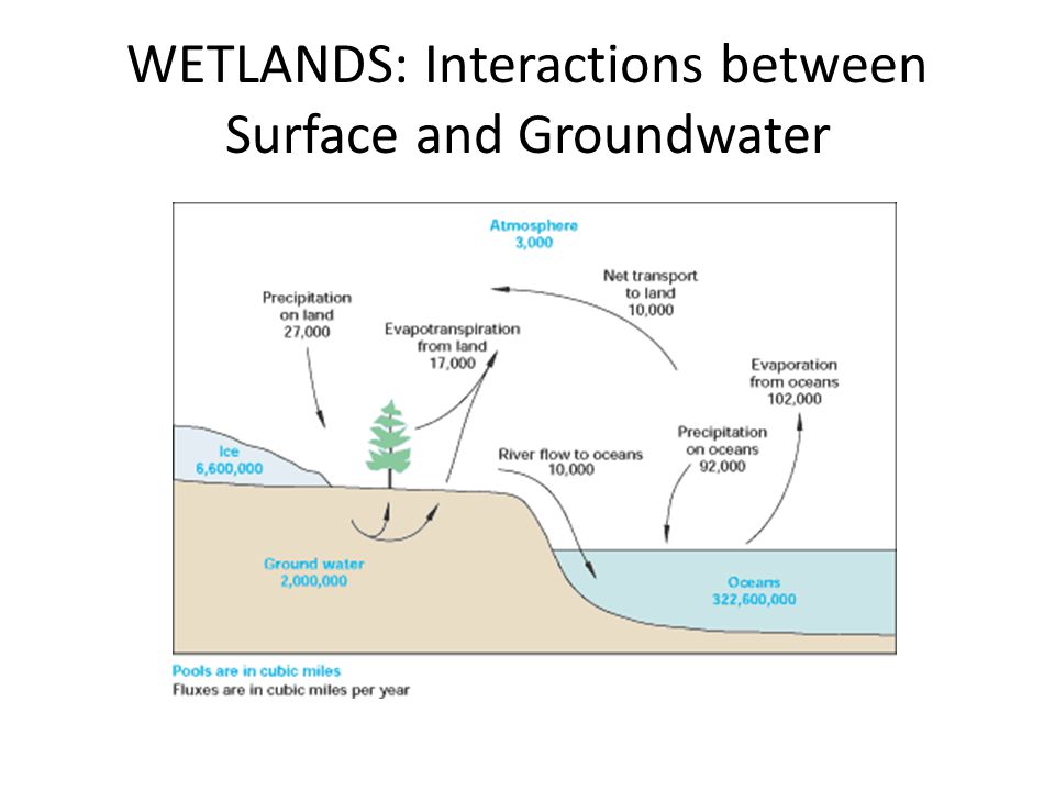 WETLANDS: Interactions between Surface and Groundwater