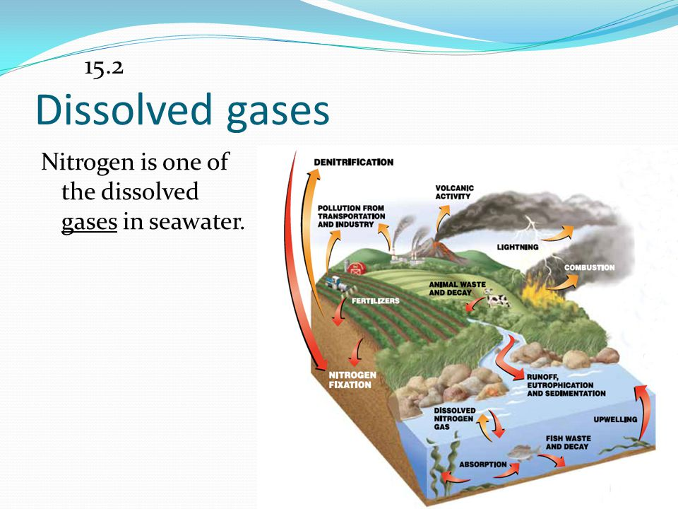 15.2 Dissolved gases Nitrogen is one of the dissolved gases in seawater.