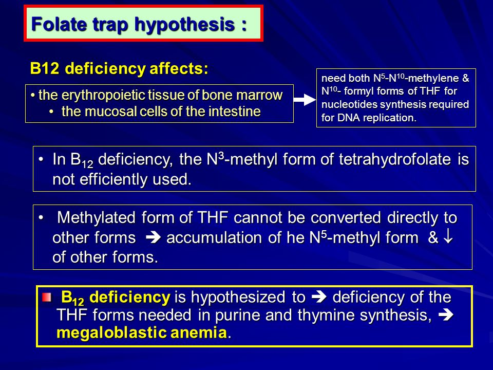 Folate trap hypothesis :