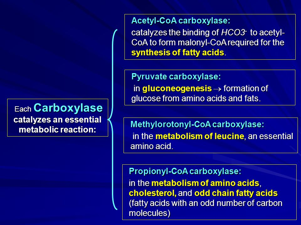Each Carboxylase catalyzes an essential metabolic reaction: