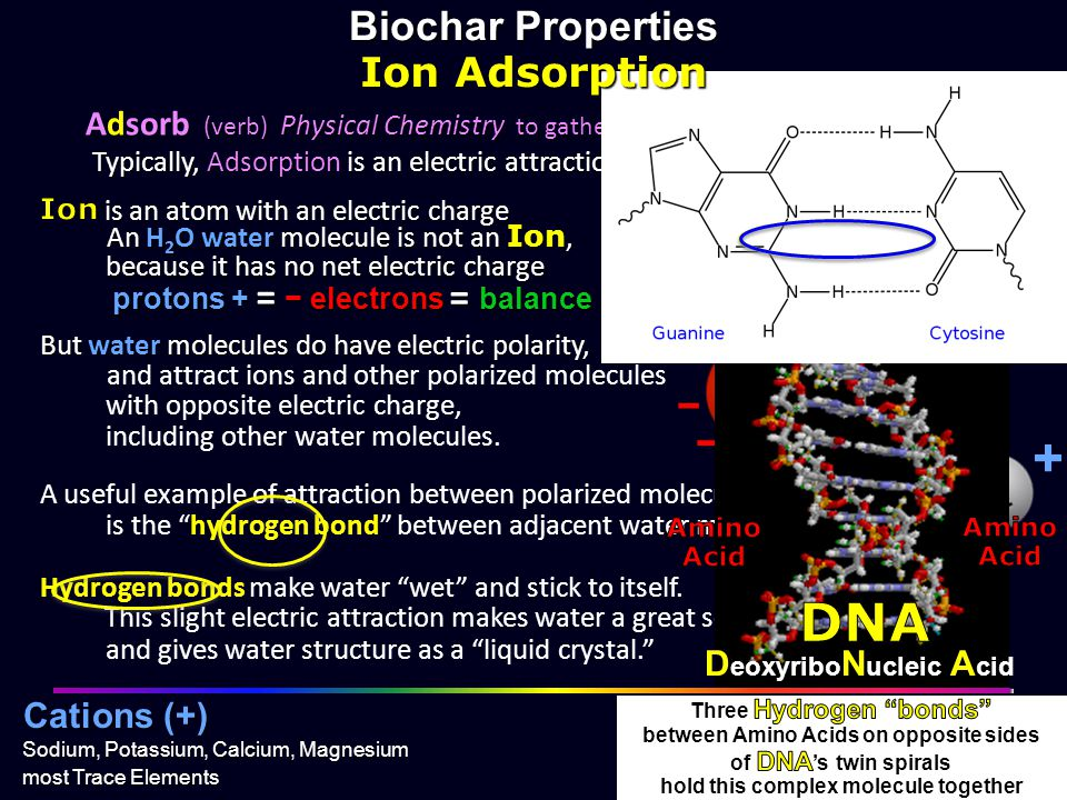 H2O + + + DNA + Biochar Properties Ion Adsorption = = water − − − −