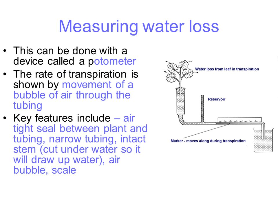 Measuring water loss This can be done with a device called a potometer