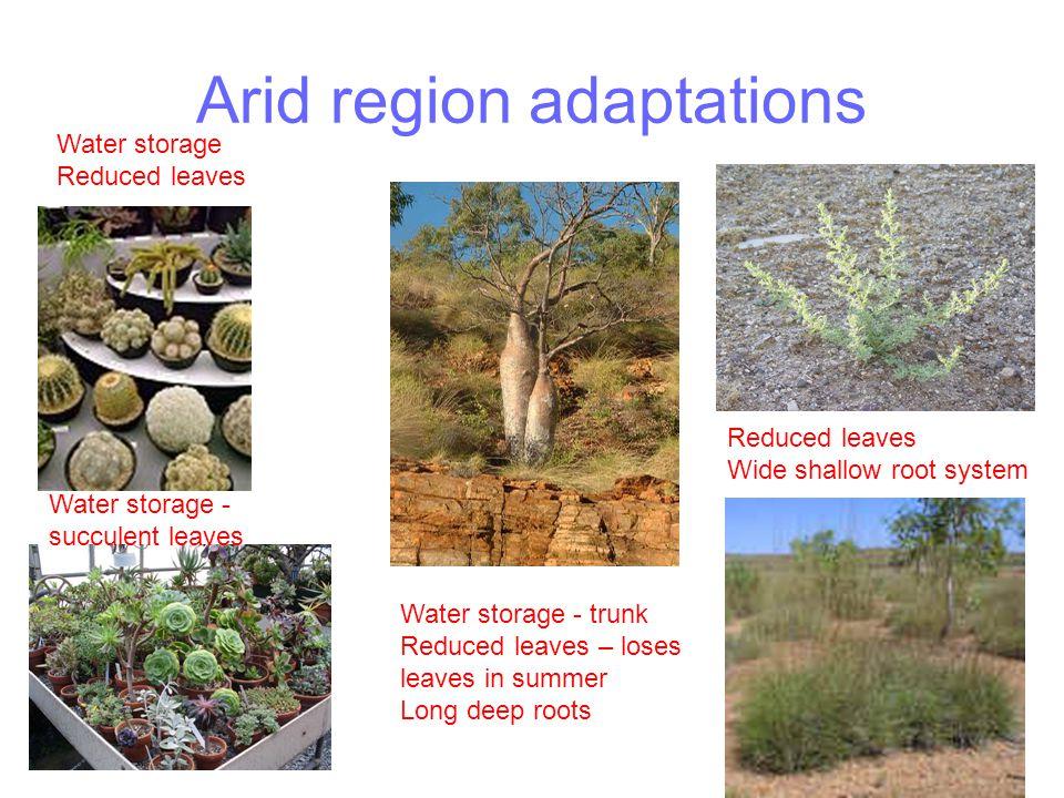 Arid region adaptations