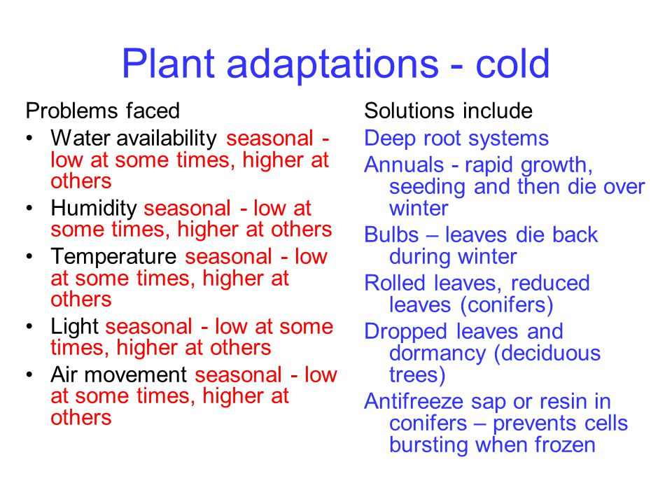 Plant adaptations - cold