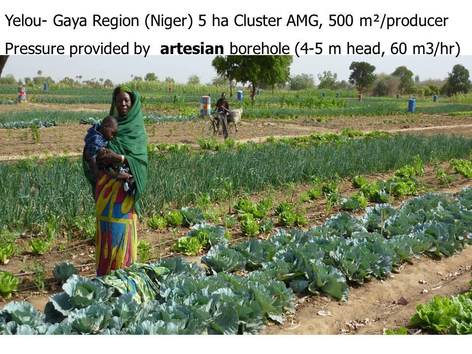 Yelou- Gaya Region (Niger) 5 ha Cluster AMG, 500 m²/producer