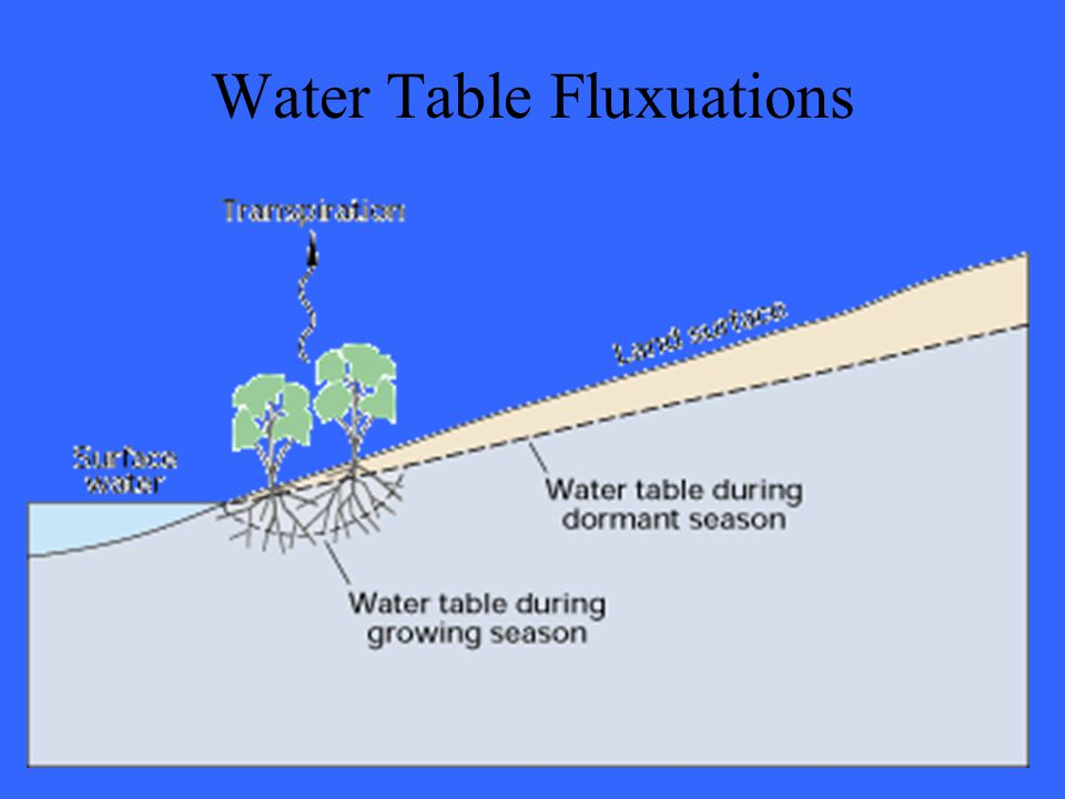Water Table Fluxuations