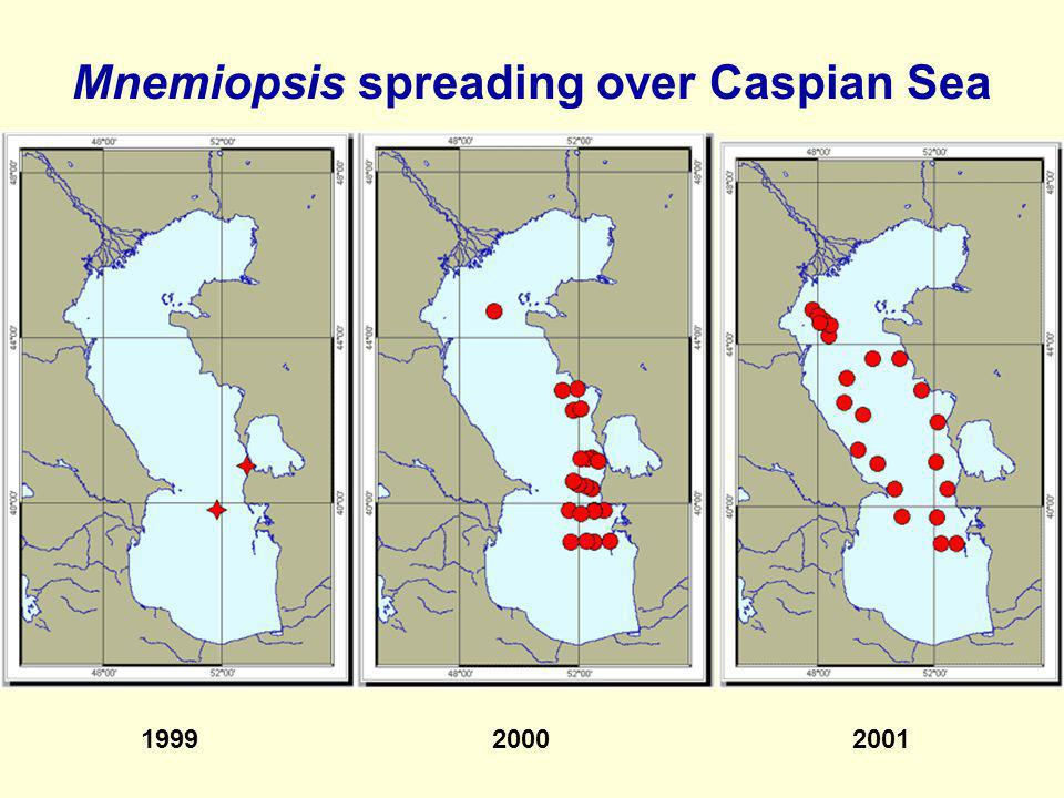 Mnemiopsis spreading over Caspian Sea