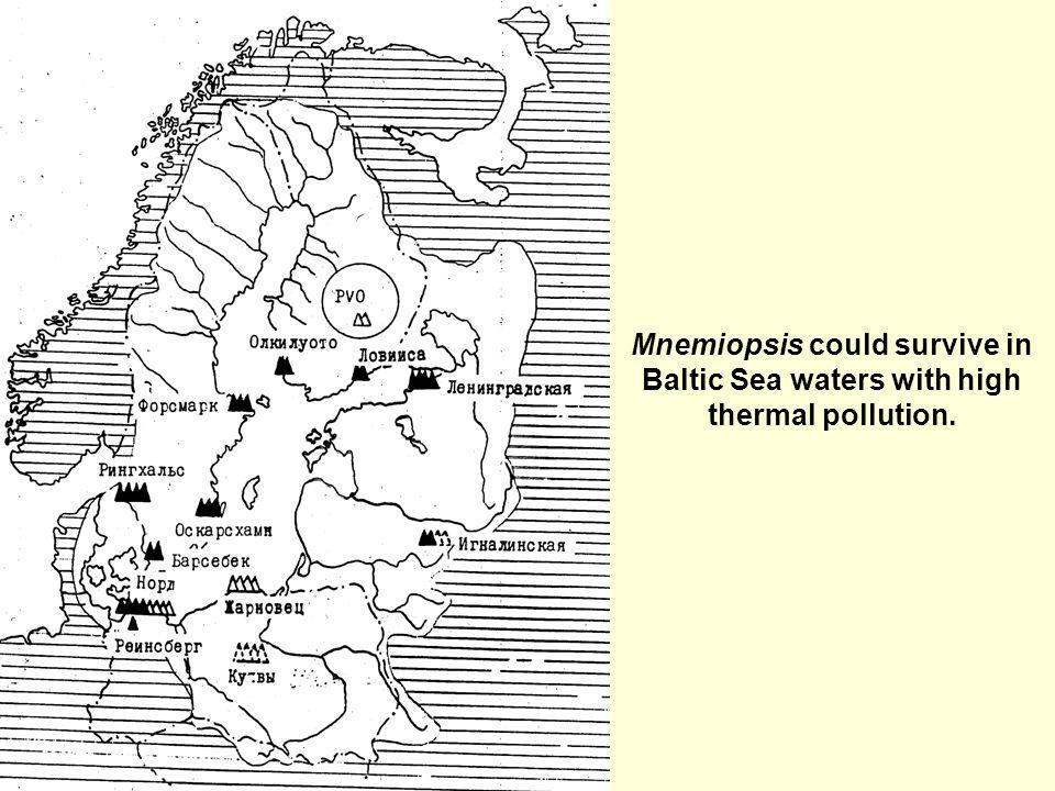 Mnemiopsis could survive in Baltic Sea waters with high thermal pollution.