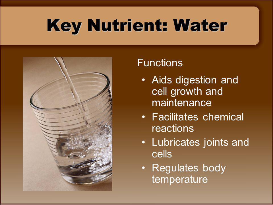 Key Nutrient: Water Functions