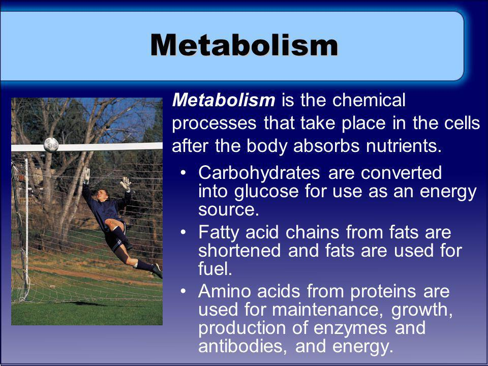 Metabolism Metabolism is the chemical processes that take place in the cells after the body absorbs nutrients.