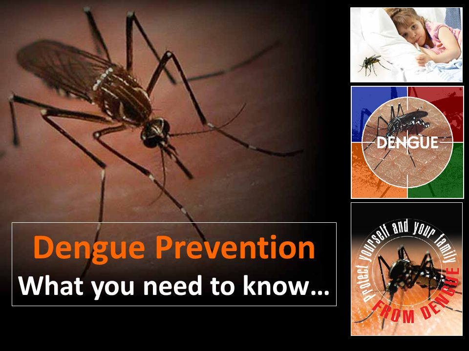 Dengue Prevention What you need to know…