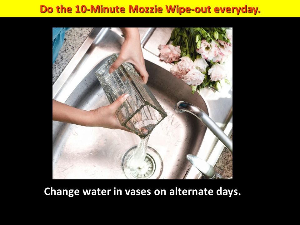 Do the 10-Minute Mozzie Wipe-out everyday.