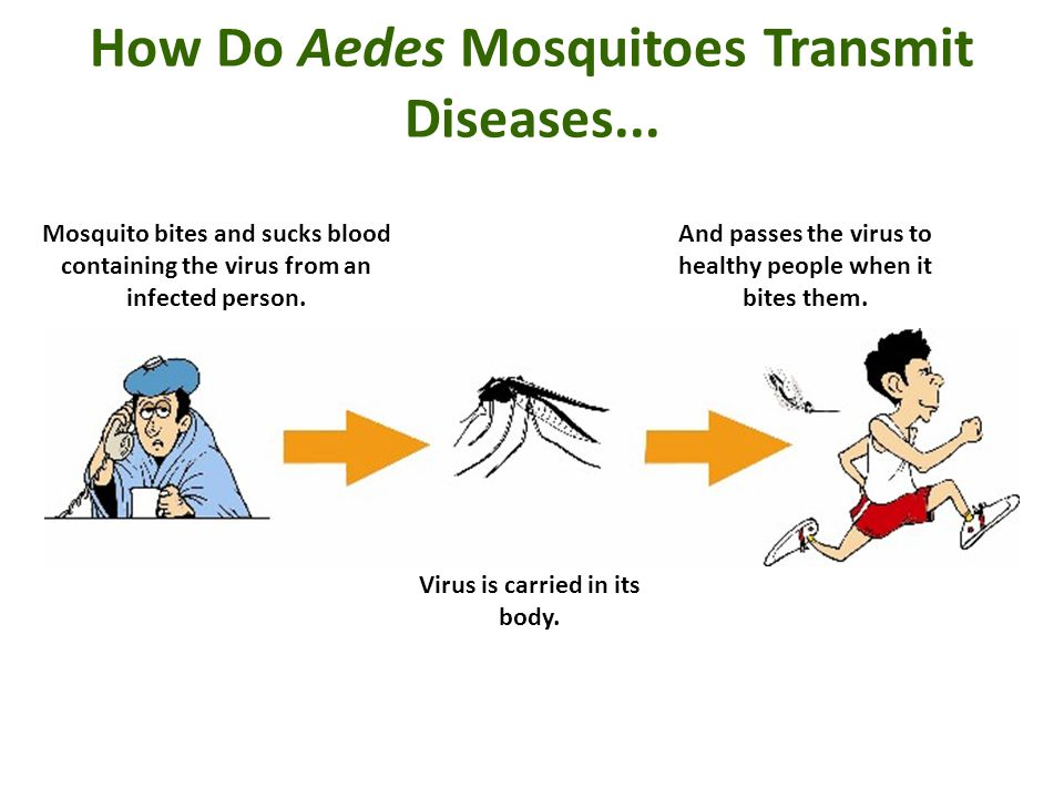 How Do Aedes Mosquitoes Transmit Diseases...
