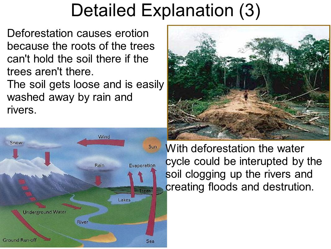 Detailed Explanation (3)