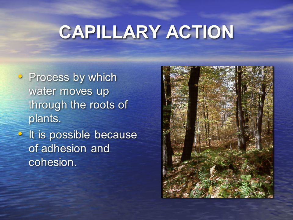 CAPILLARY ACTION Process by which water moves up through the roots of plants.