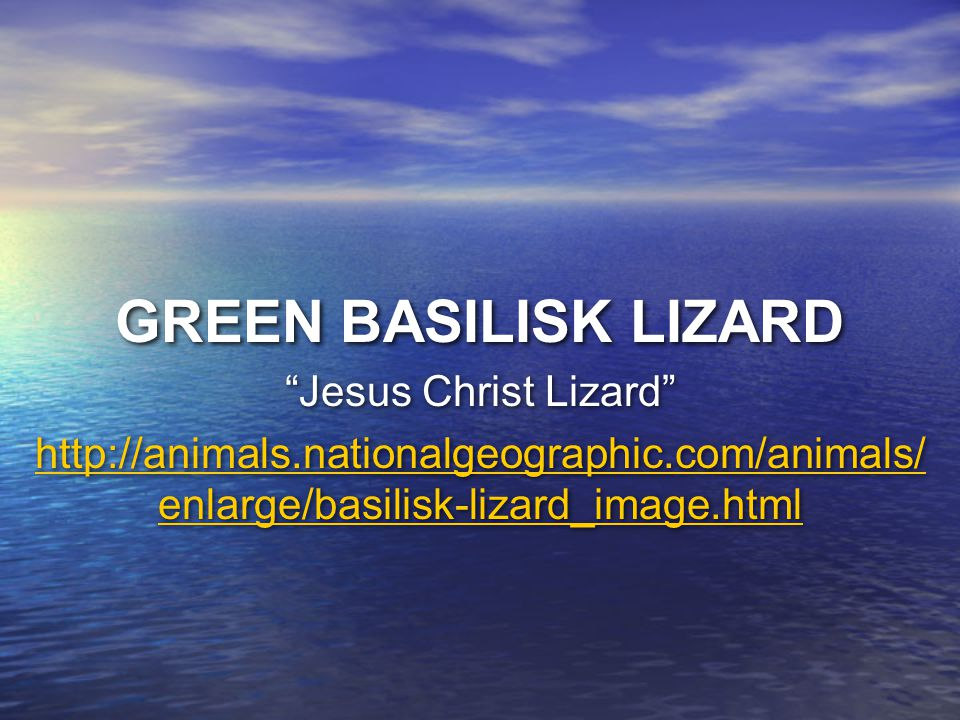 GREEN BASILISK LIZARD Jesus Christ Lizard