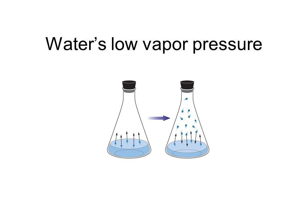 Water's low vapor pressure