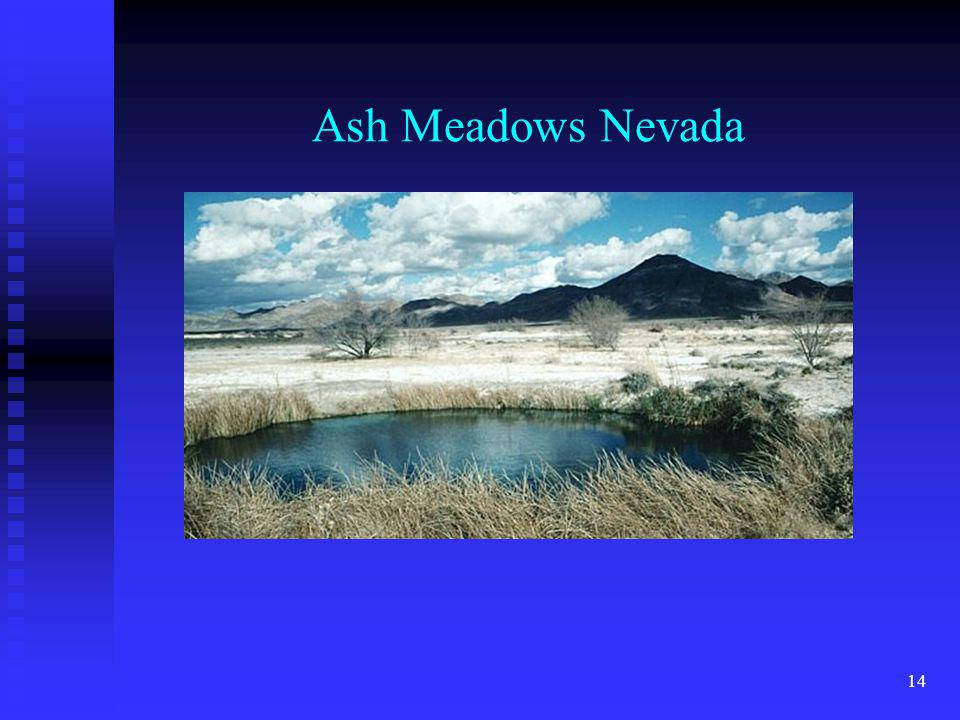 Ash Meadows Nevada