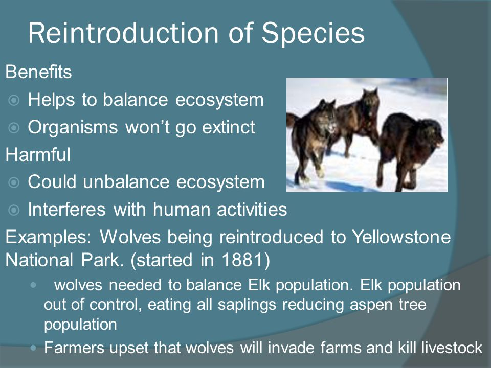 Reintroduction of Species