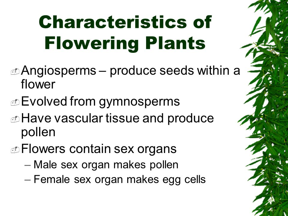 Characteristics of Flowering Plants