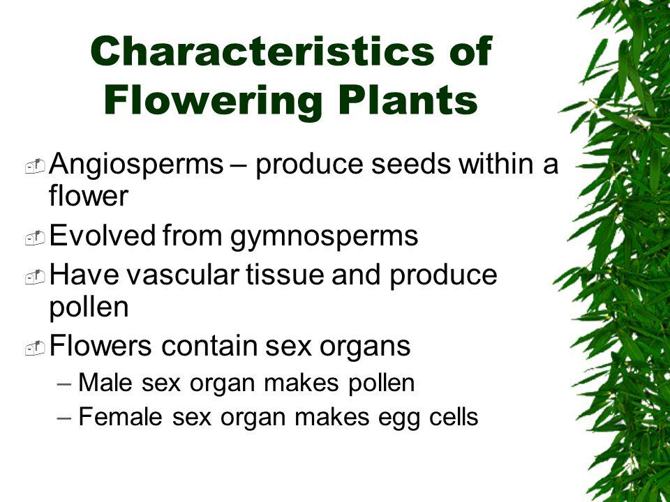 Characteristics of Flowering Plants