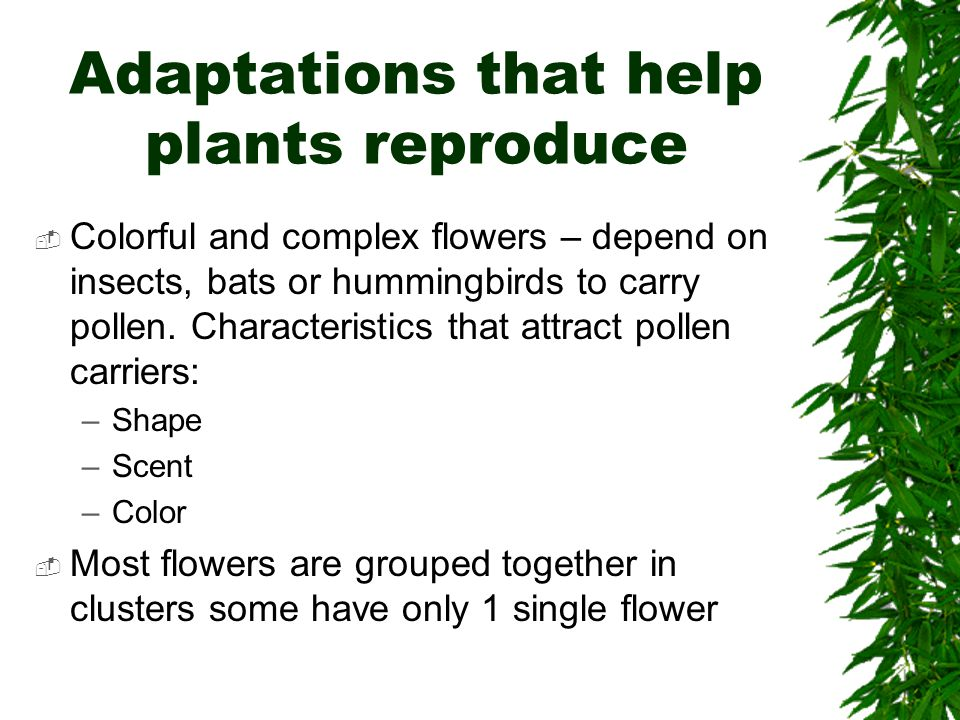 Adaptations that help plants reproduce