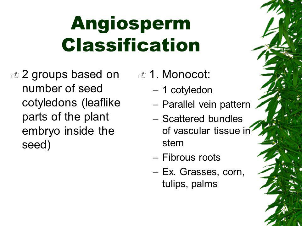 Angiosperm Classification
