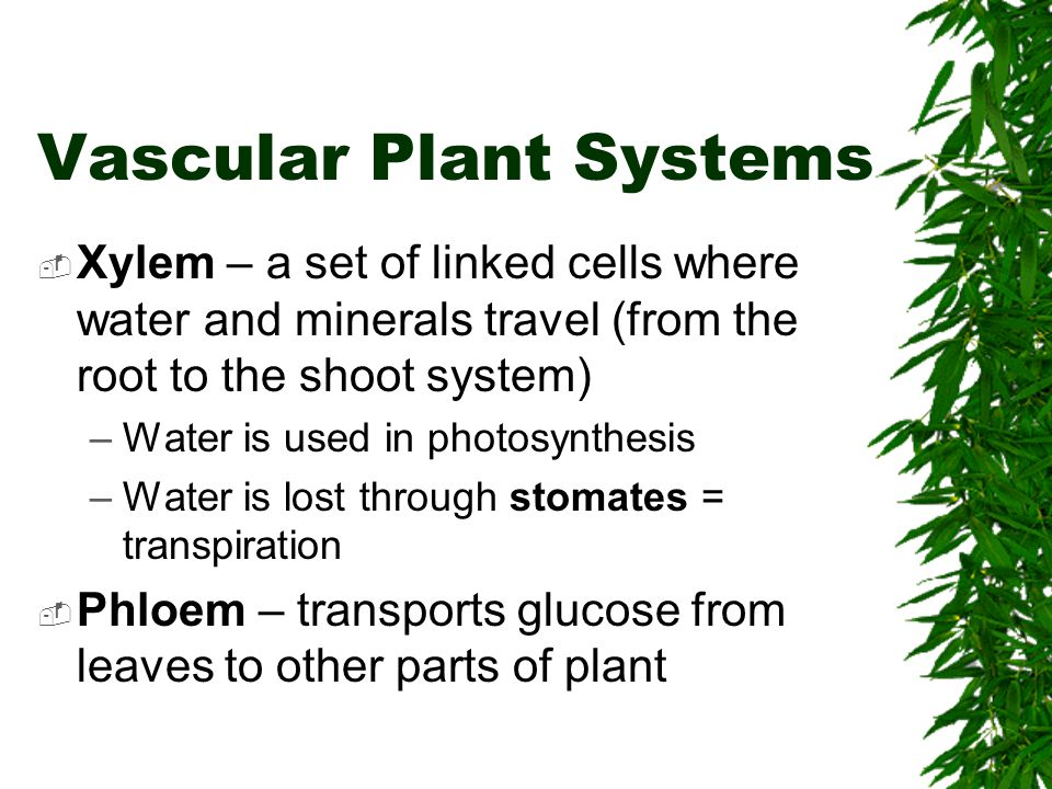 Vascular Plant Systems
