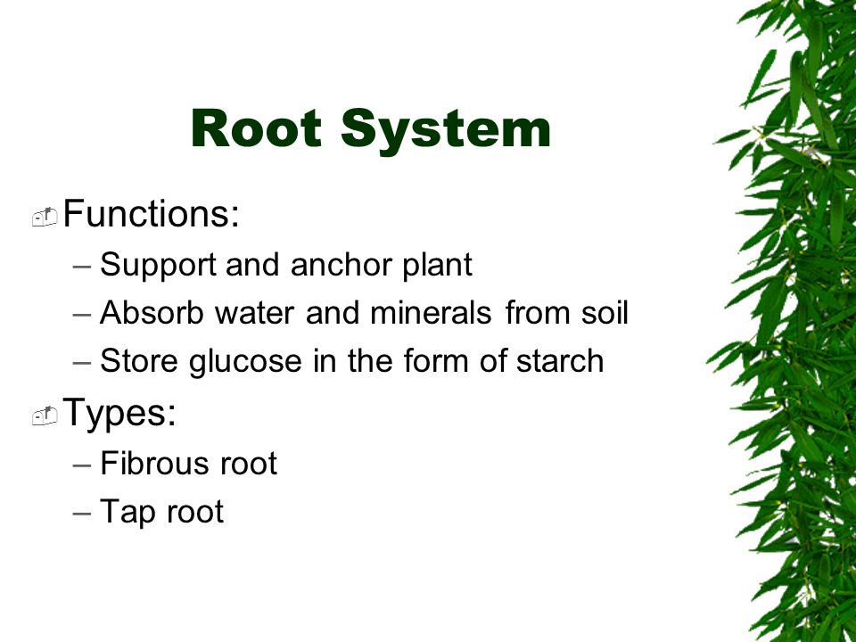 Root System Functions: Types: Support and anchor plant