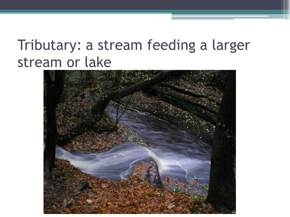 Tributary: a stream feeding a larger stream or lake