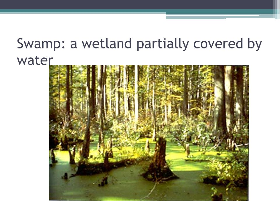 Swamp: a wetland partially covered by water