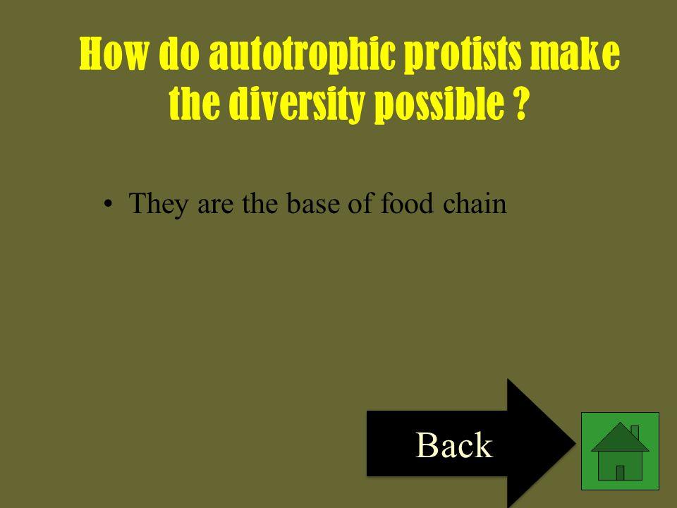 How do autotrophic protists make the diversity possible