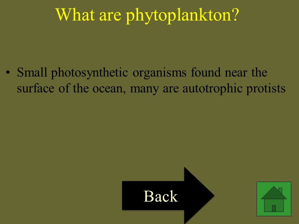 What are phytoplankton