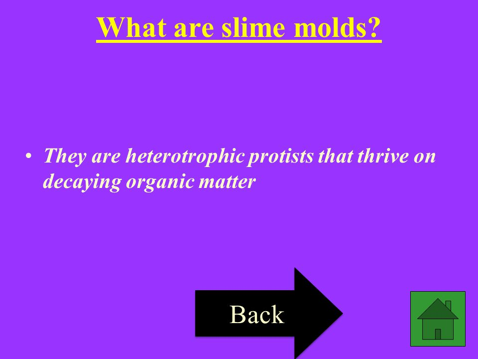 What are slime molds Back