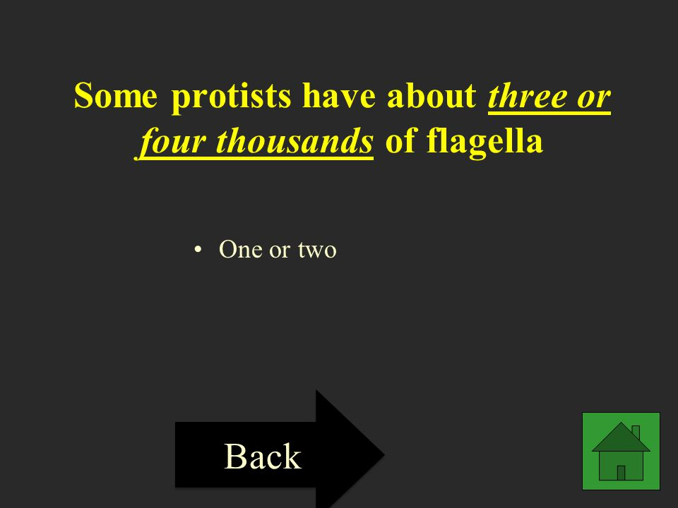 Some protists have about three or four thousands of flagella