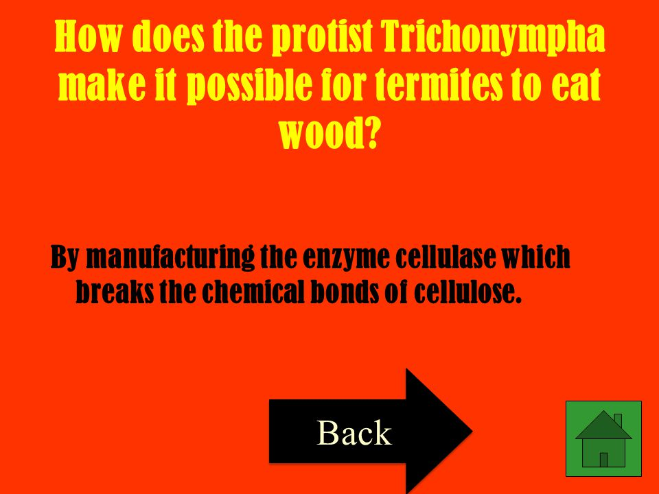 How does the protist Trichonympha make it possible for termites to eat wood