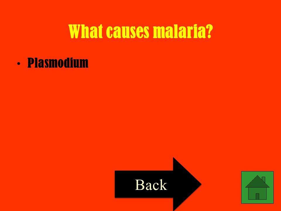 What causes malaria Plasmodium Back