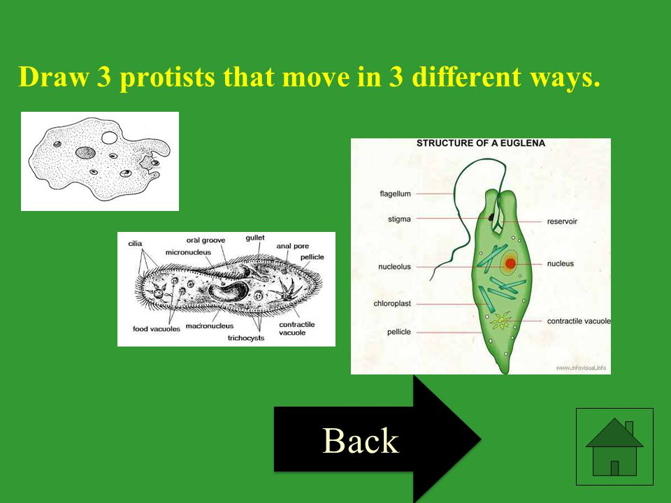 Draw 3 protists that move in 3 different ways.