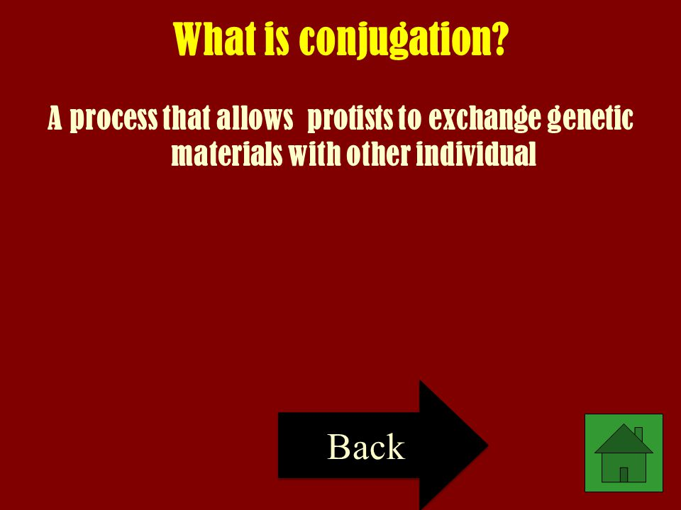 What is conjugation Back