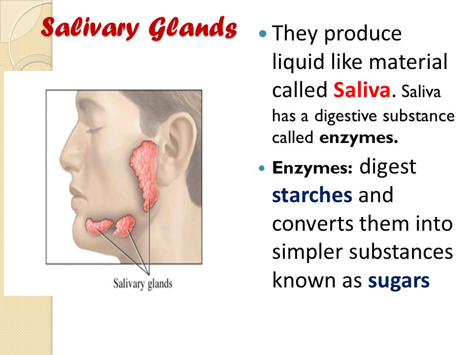 Salivary Glands They produce liquid like material called Saliva. Saliva has a digestive substance called enzymes.